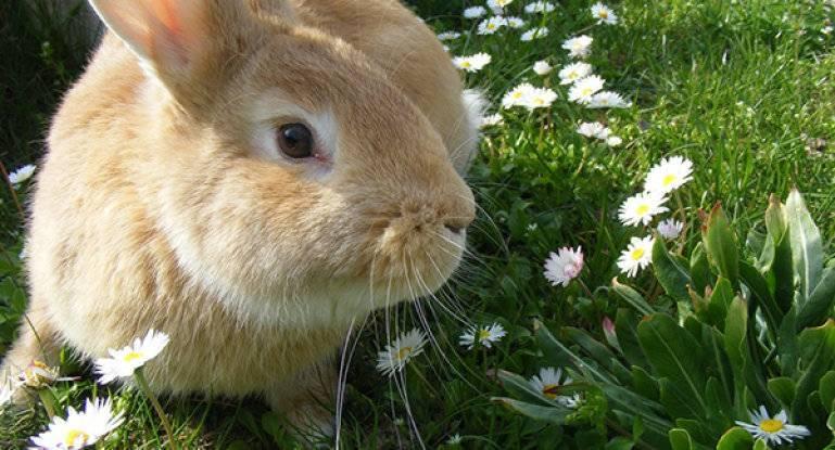Вредная трава для декоративных кроликов