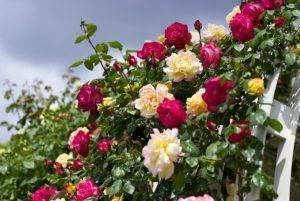 Дрожжи для растений как удобрение. 3 простых рецепта приготовления удобрений из дрожжей. | красивый дом и сад