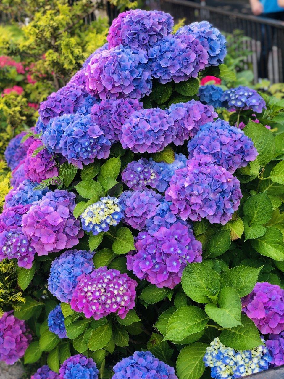Бордюрные цветы и растения многолетники: фото в каталоге и названия