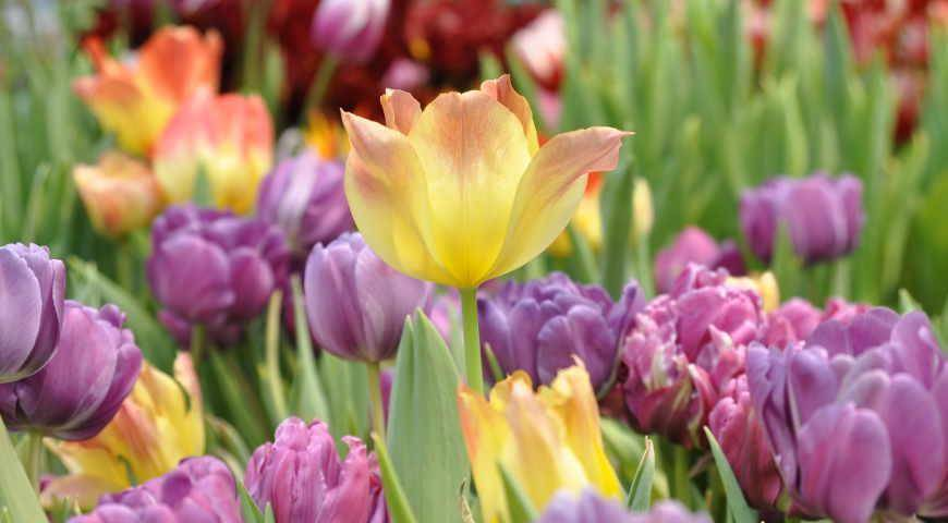 Какие красивые цветы можно посадить в саду