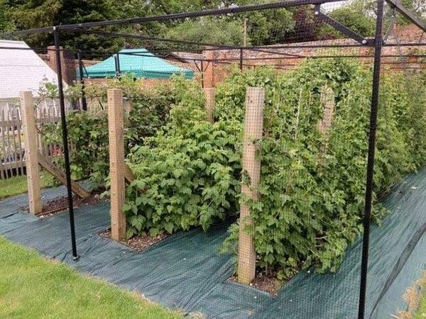 Крепкая опора для винограда – как подвязать виноград своими руками