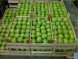 Яблоки ренет симиренко