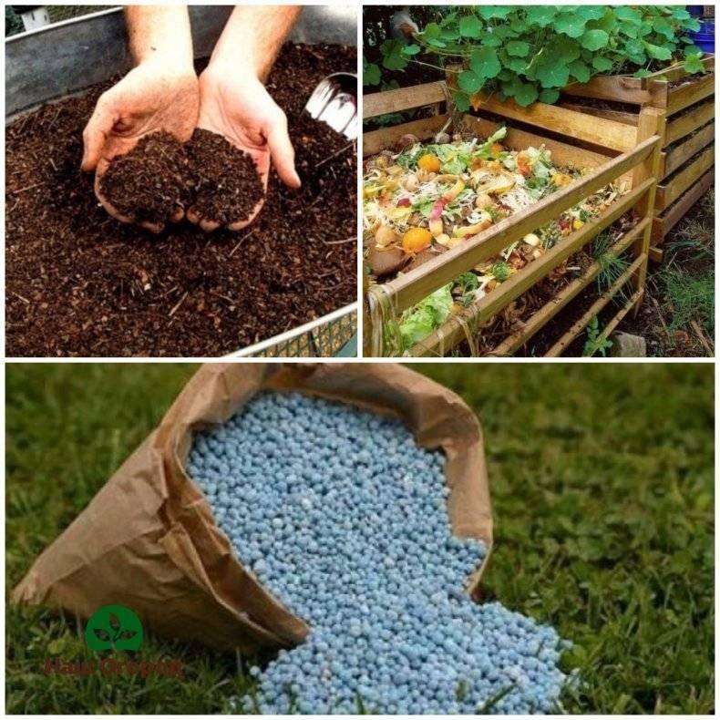 Чем подкормить жимолость весной: удобрения для кустарника