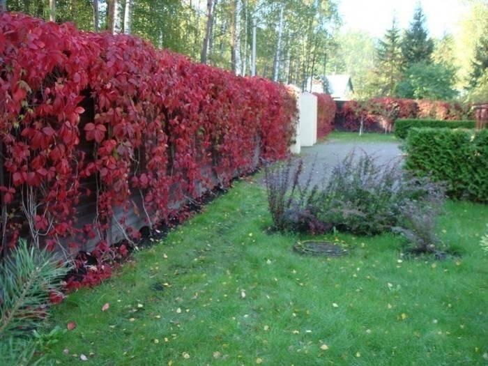 Шпалеры для винограда своими руками: чертежи + фото