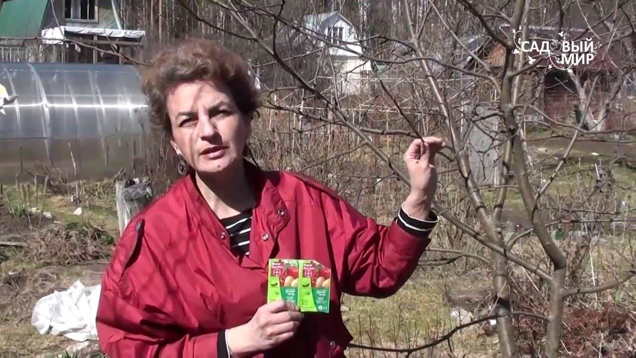 Чем опасен лишайник на яблоне? советы экспертов, как бороться