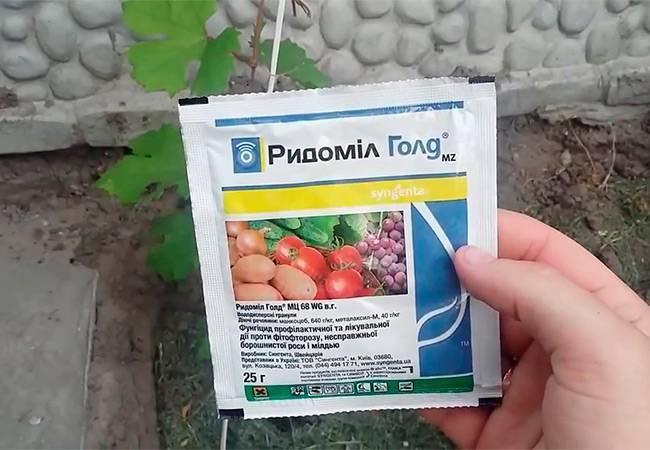 """Как применять фунгицид """"ридомил голд"""" для защиты растений от комплекса болезней"""