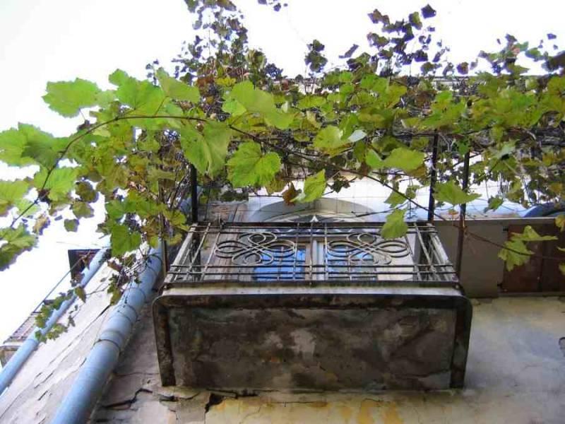 Как красиво и правильно укрыть растения зимой на балконе. особенности выращивания девичьего винограда на балконе