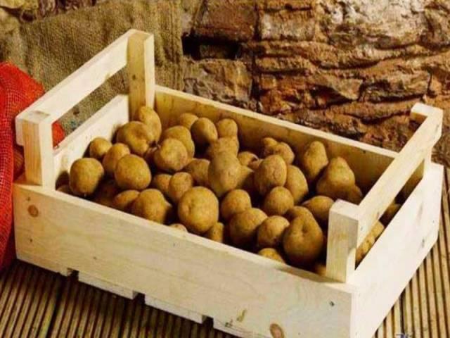 Ранняя звезда картофельных полей — картофель «вега»: описание и характеристики