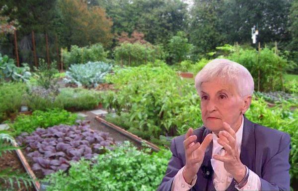 Метод митлайдера: как сажать картофель, схема посадки, выращивание