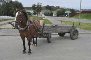Сани для лошади (17 фото): как сделать зимние сани для лошади? как выбрать размеры саней? как приучить лошадь к саням?