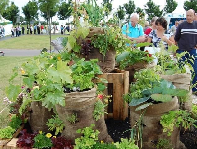 Выращивание огурцов в бочке: инструкция, плюсы и минусы метода, отзывы