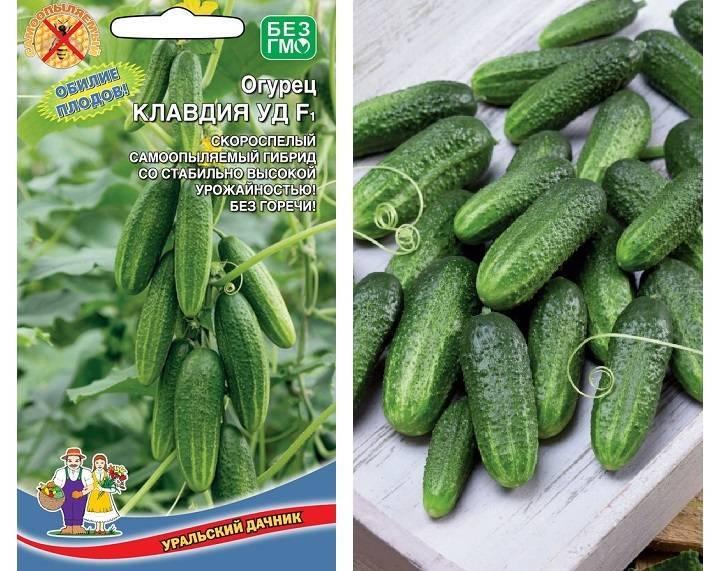 Лучшие сорта огурцов для тепличного выращивания на урале