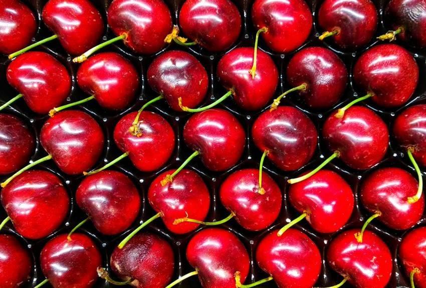 Когда спеют абрикосы: время созревания в россии, абхазии, армении, азербайджане