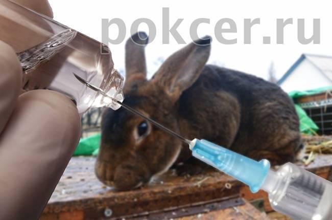Как, какие и когда делать прививки кроликам?
