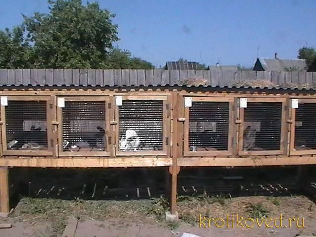 Клетки для кроликов – устройство конструкции, что должно быть внутри, особенности разных видов