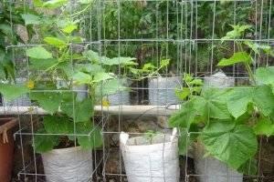 Пошаговая инструкция, как правильно вырастить огурцы в открытом грунте