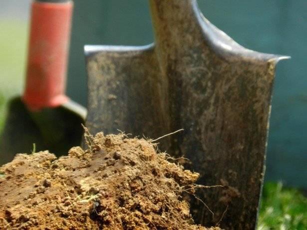 Как посадить капусту в открытом грунте под бутылки: секреты выращивания