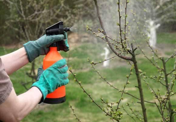 Поэтапная обработка яблонь от вредителей и болезней весной. советы профессионалов