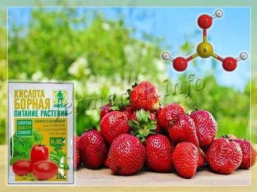 Подкормка клубники весной йодом и борной кислотой - рецепты