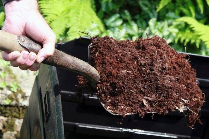 Посадка клубники рассадой: как и когда сажают весной, красиво, метод посадки клубники в грунт и под агроволокно, сроки посадки