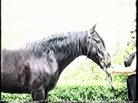 Карачаевская порода лошадей: происхождение и характеристики