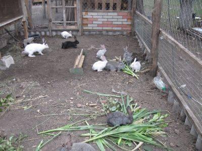Как сделать вольер для кроликов своими руками?