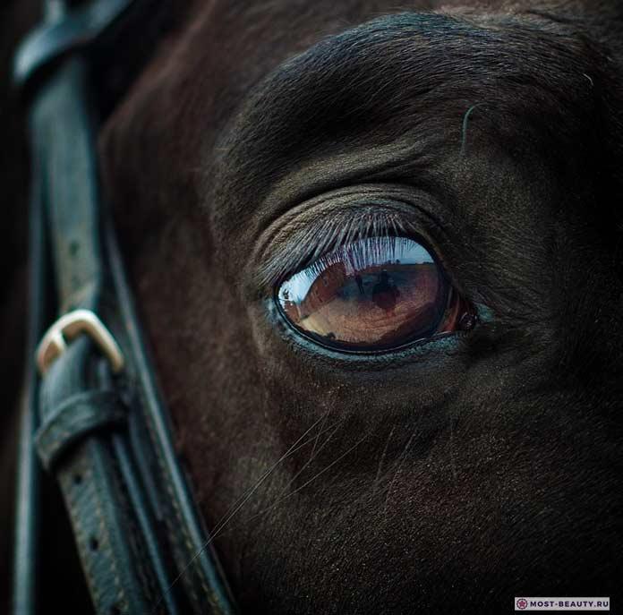Мир глазами животных: