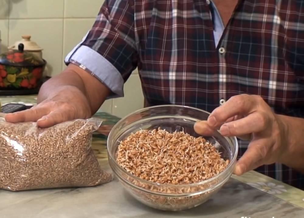 Можно ли давать кроликам пшеницу? особенности ухода и кормления кроликов, рацион, советы и рекомендации - общая информация - 2020