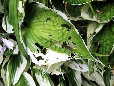 Болезни комнатных растений: описание и меры борьбы