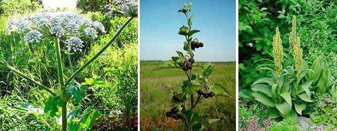 Крапивный отвар курам. травы для взрослых несушек