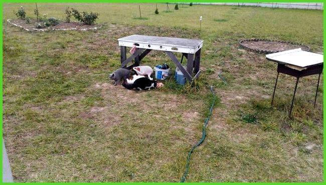 Краткое руководство как избавиться от крота в огороде