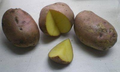 Сорт картофеля никулинский: описание сорта, фото, характеристика