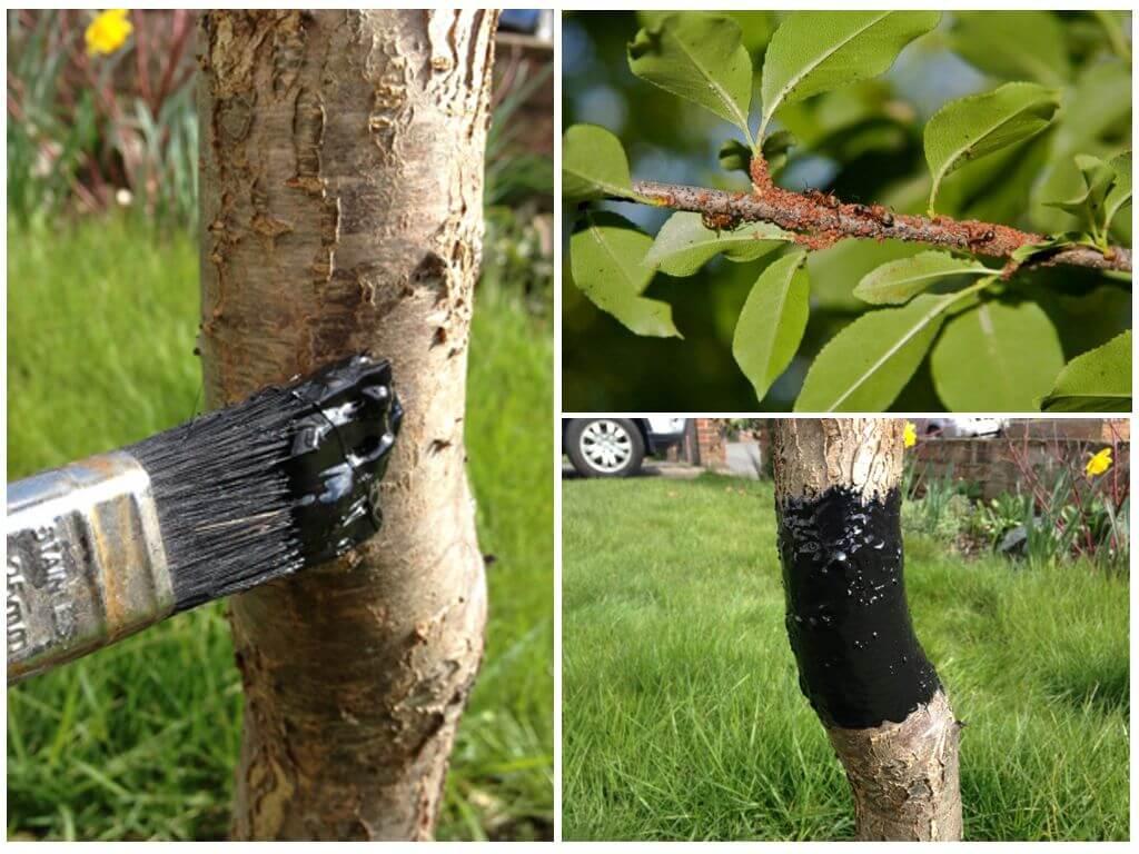 Тля на плодовых деревьях: борьба, опрыскивание и обработка от вредителей