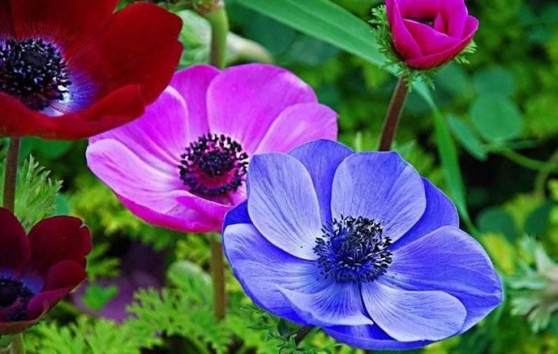 О всех видах садовых цветов многолетников для Урала: названия и описания, уход