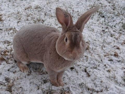 Шуба из кролика «рекс»