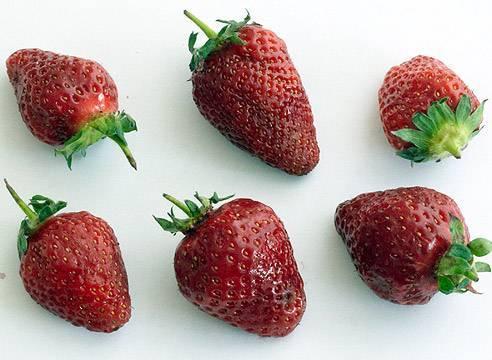 Почему сохнут ягоды клубники во время созревания