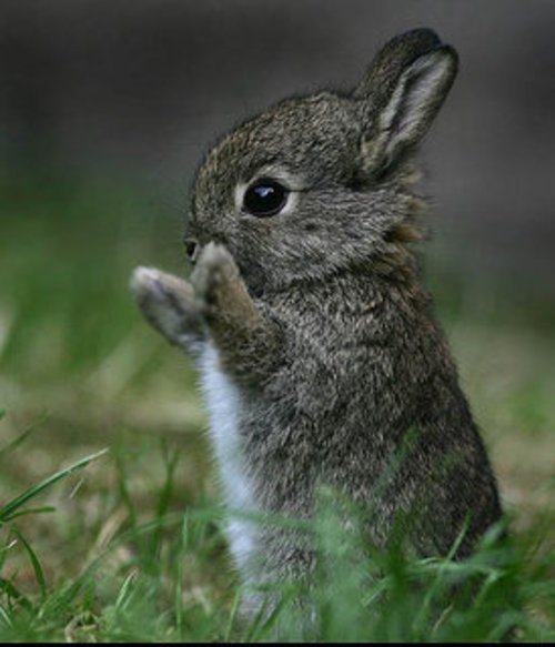 Чем отличается заяц от кролика: сходство и разница - общая информация - 2020