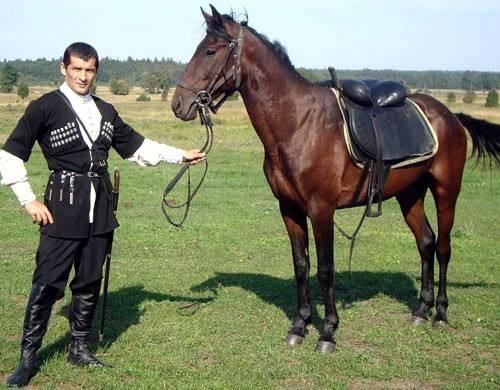 Обзор кабардинской породы лошадей