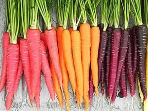 Скорцонера: выращивание из семян, сорта, уход. скорцонера или козелец — лекарственные свойства