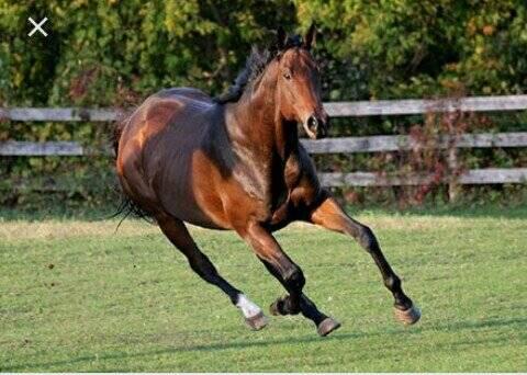 Быстрее ветра: кто самая резвая лошадь в мире?