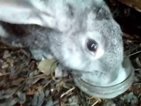 Можно ли давать кроликам соль лизунец?