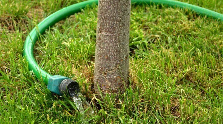 Когда и как часто поливать плодовые деревья: правила полива весной и летом