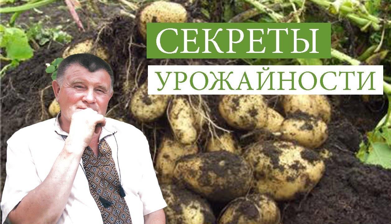 Подготовка почвы под картофель осенью рекомендации специалистов. подготовка земли под картофель осенью