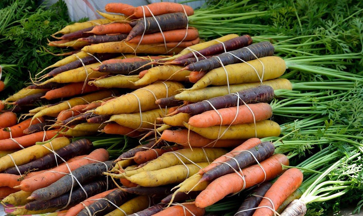 Как посадить морковь, чтобы она быстро взошла
