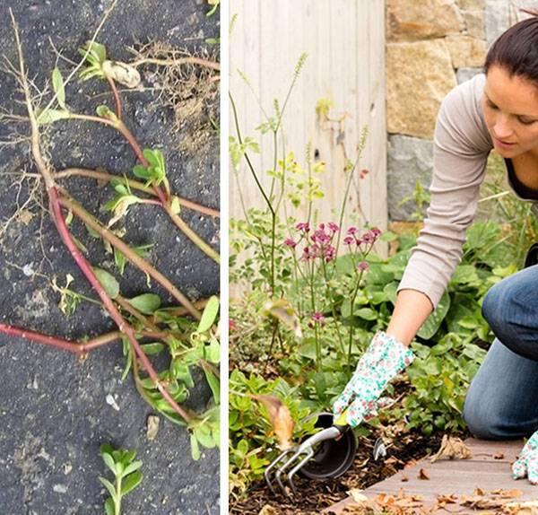 Современные методы борьбы с сорняками на огороде