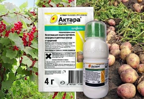 Инсектициды - список препаратов для борьбы с вредителями растений