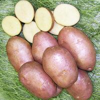 Сорт картофеля бельмондо: ботаническое описание, агротехника выращивания и уход