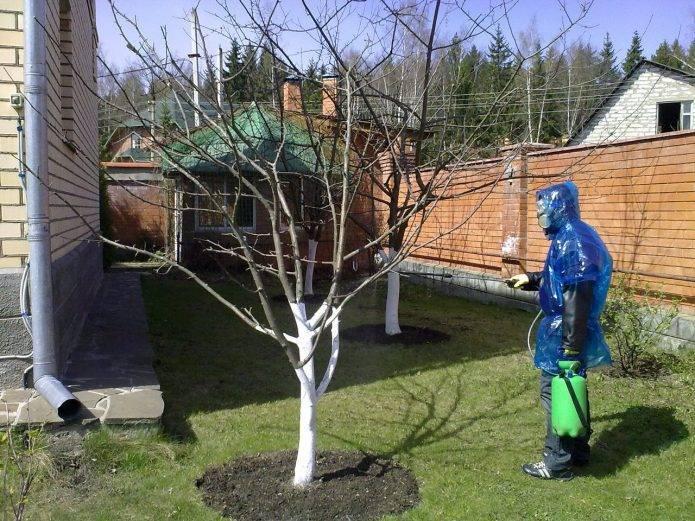 Обработка яблонь весной от болезней и вредителей железным и медным купоросом