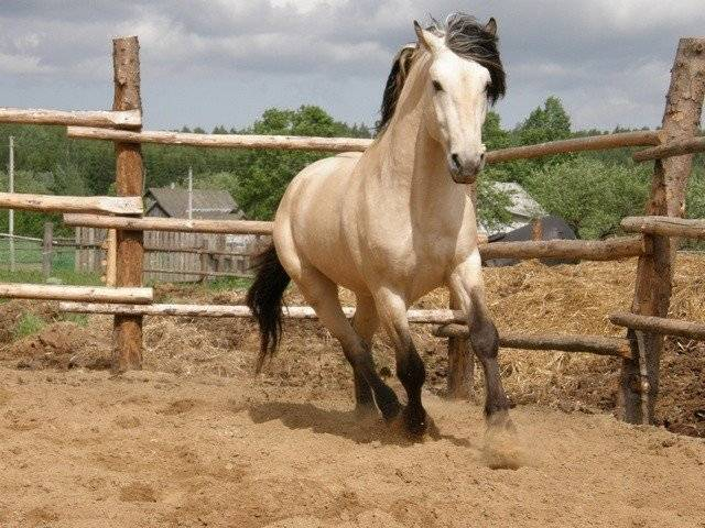 Сколько примерно живет лошадь