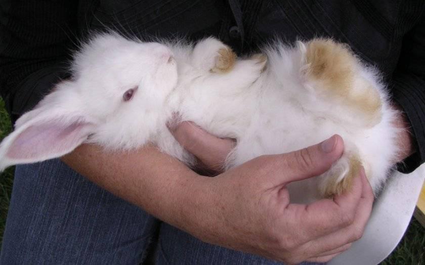 Паралич задних лап: может ли кролик вернуться в строй?